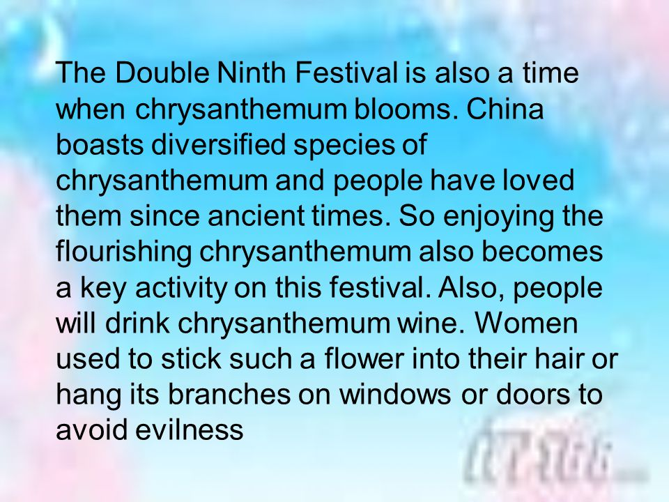 The Double Ninth Festival is also a time when chrysanthemum blooms.