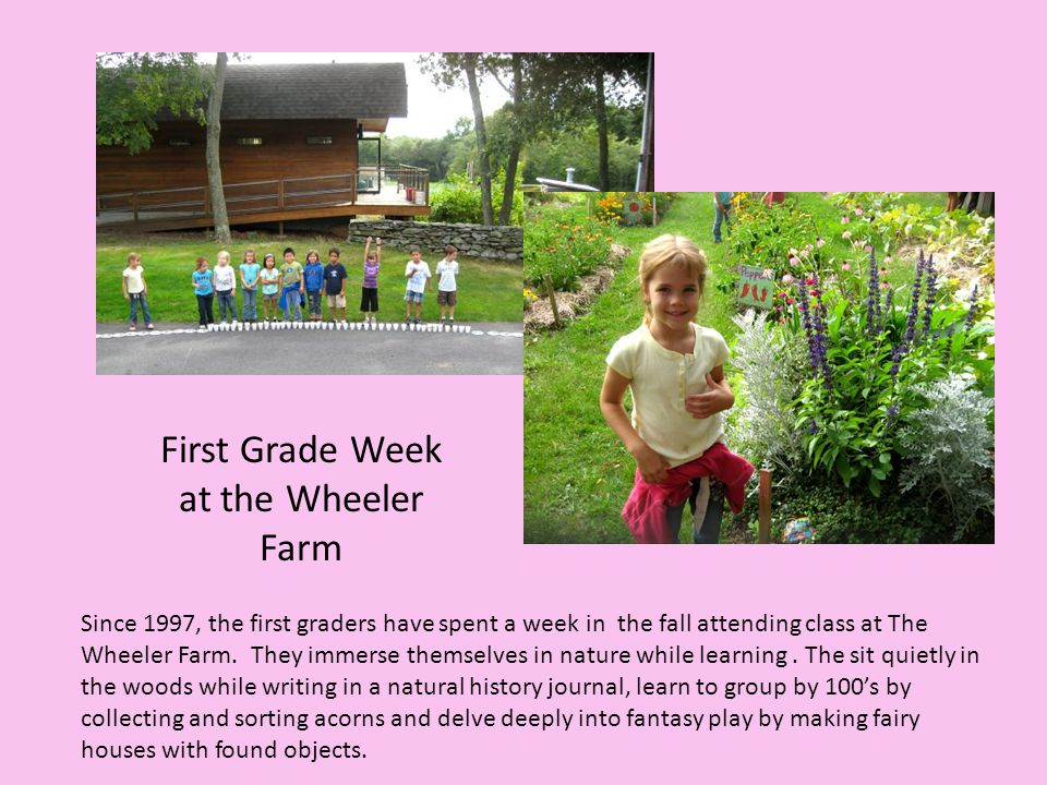 Since 1997, the first graders have spent a week in the fall attending class at The Wheeler Farm. They immerse themselves in nature while learning. The