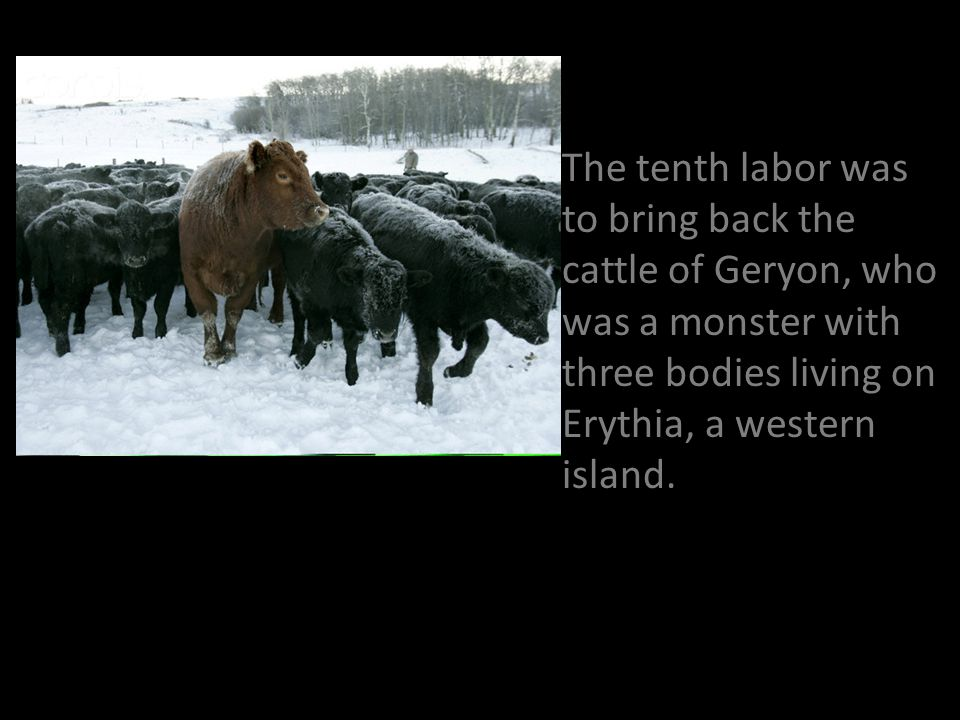 The tenth labor was to bring back the cattle of Geryon, who was a monster with three bodies living on Erythia, a western island.