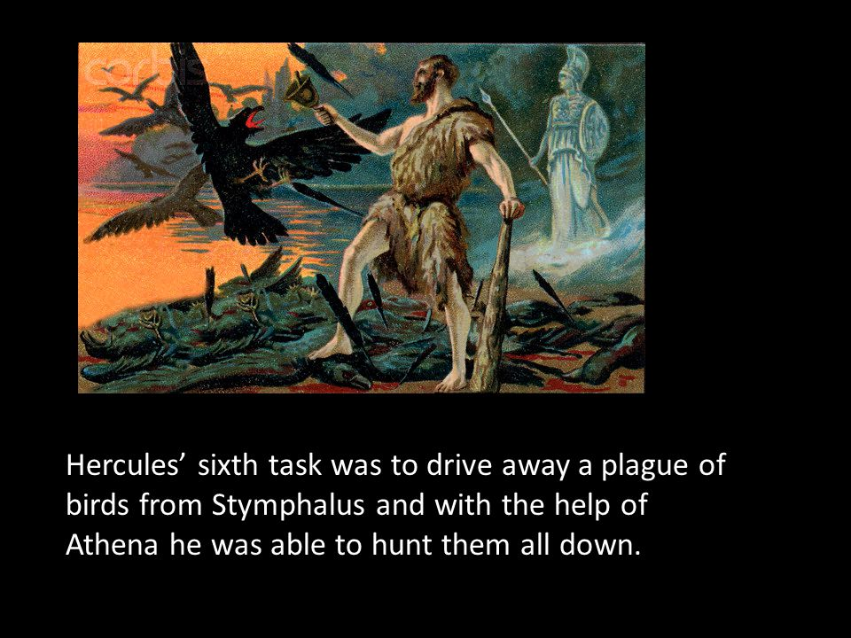 Hercules' sixth task was to drive away a plague of birds from Stymphalus and with the help of Athena he was able to hunt them all down.