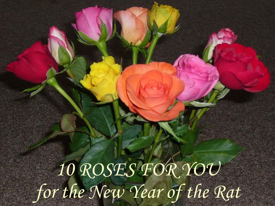 10 ROSES FOR YOU for the New Year of the Rat