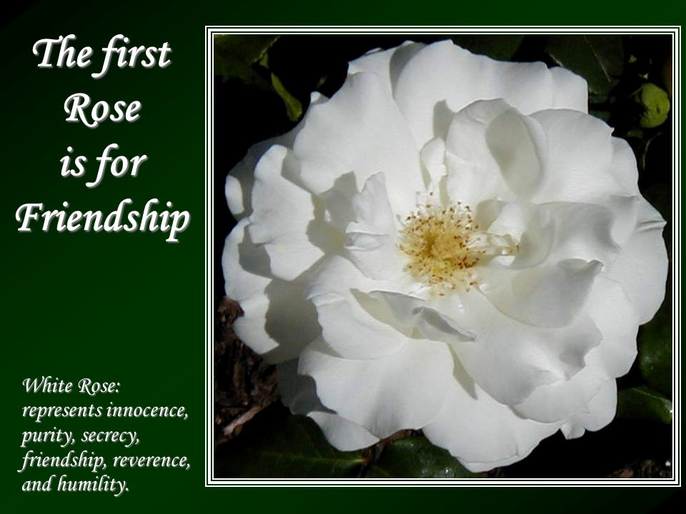 The first Rose is for Friendship White Rose: represents innocence, purity, secrecy, friendship, reverence, and humility.