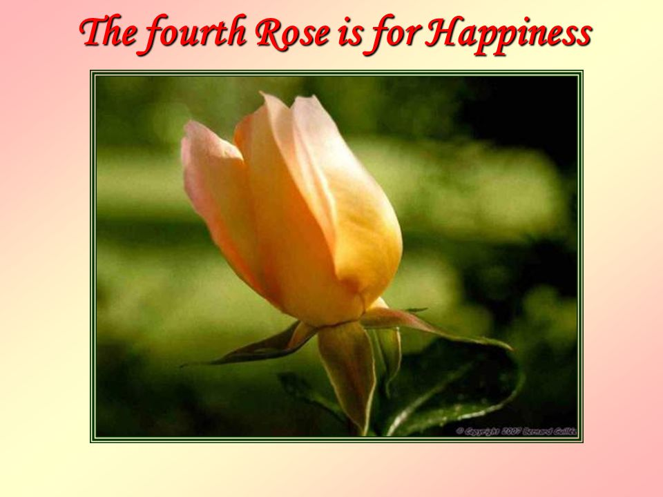 The fourth Rose is for Happiness