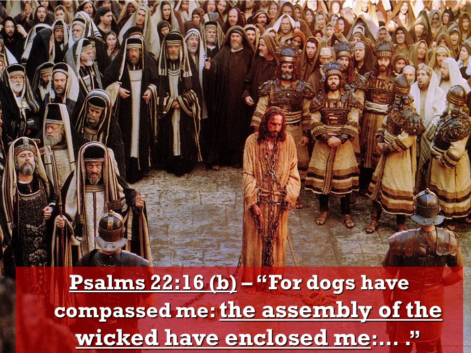Psalms 22:16 (b) – For dogs have compassed me: the assembly of the wicked have enclosed me :….