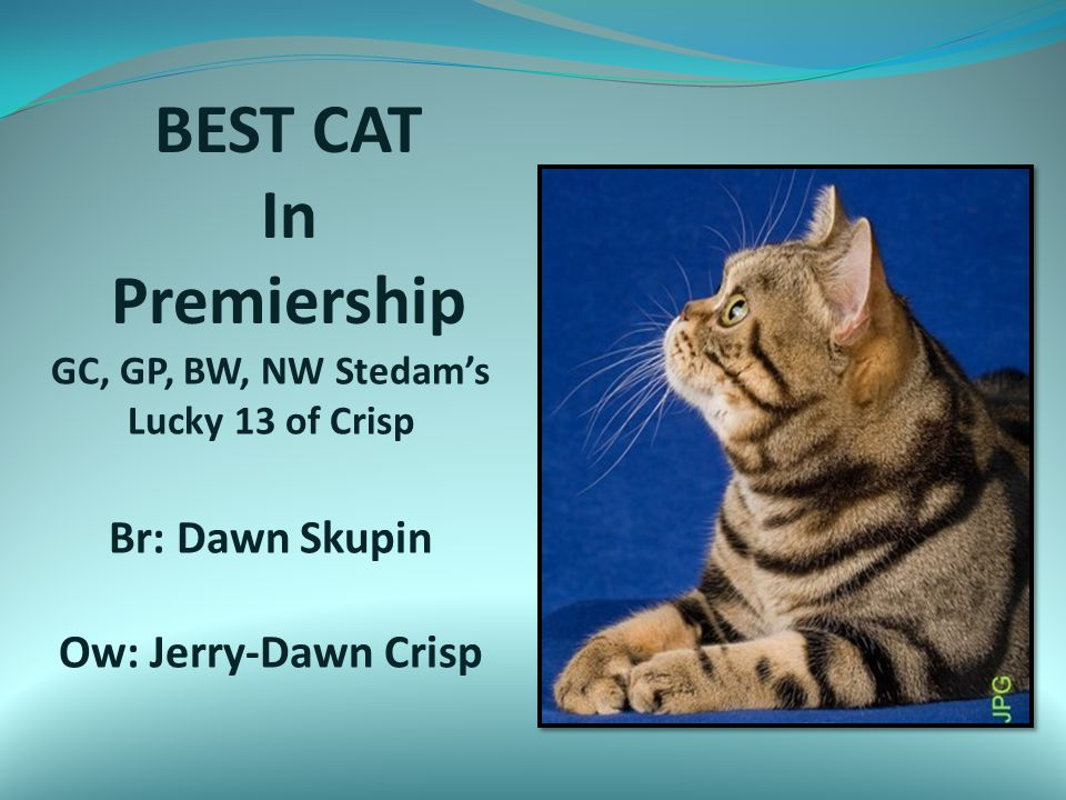 BEST CAT In Premiership GC, GP, BW, NW Stedam's Lucky 13 of Crisp Br: Dawn Skupin Ow: Jerry-Dawn Crisp