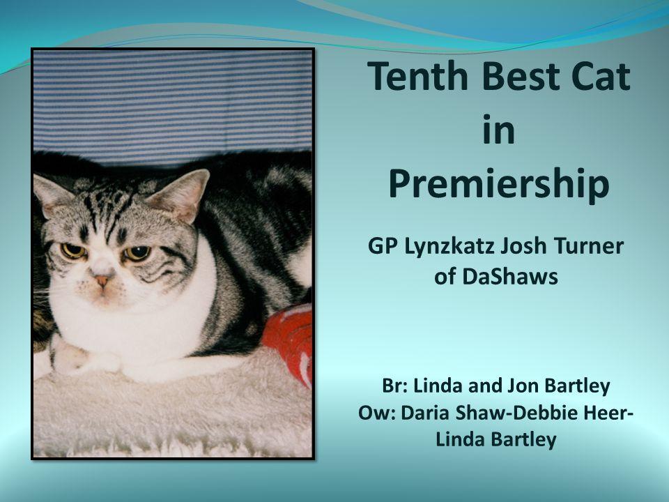 Tenth Best Cat in Premiership GP Lynzkatz Josh Turner of DaShaws Br: Linda and Jon Bartley Ow: Daria Shaw-Debbie Heer- Linda Bartley