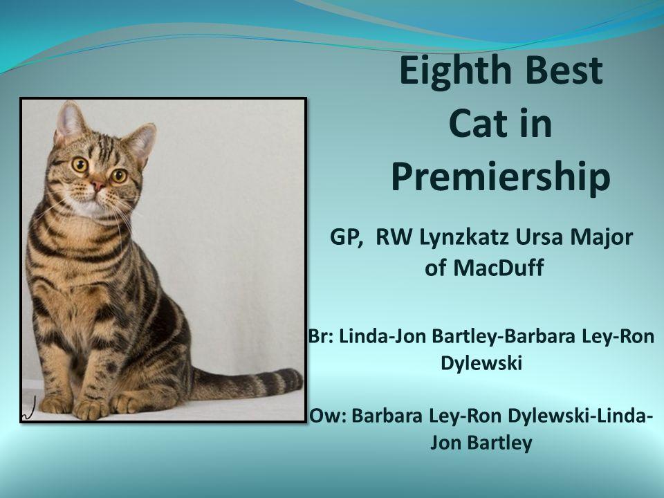 Eighth Best Cat in Premiership GP, RW Lynzkatz Ursa Major of MacDuff Br: Linda-Jon Bartley-Barbara Ley-Ron Dylewski Ow: Barbara Ley-Ron Dylewski-Linda