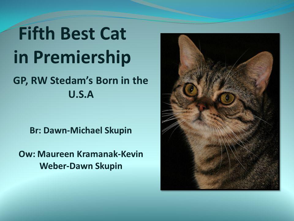 Fifth Best Cat in Premiership GP, RW Stedam's Born in the U.S.A Br: Dawn-Michael Skupin Ow: Maureen Kramanak-Kevin Weber-Dawn Skupin