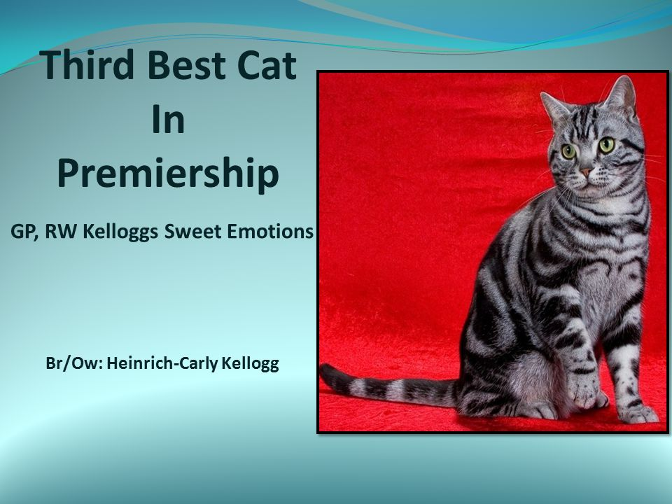 Second Best Cat in Premiership GP, RW Stedam Monday Morning Blues Br/Ow: Dawn Skupin