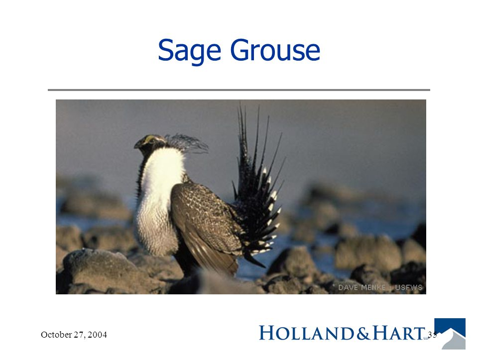 October 27, 200435 Sage Grouse