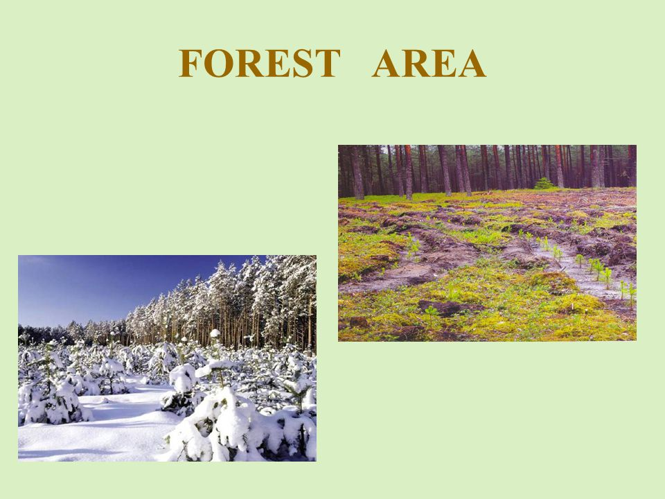 This meant that from the middle of twentieth century Lithuania has created a good forest fire protection system, which created the prerequisites for localized fires in small areas and quickly extinguish them.