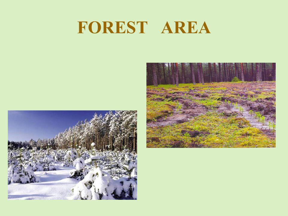 Structure of Pine stands age Visi valstybinės reikšmės miškai III-IV miško grupės * Išjungti: žemo našumo (Va, b bonitetas) medynai ir medynai (nustatyti SMI) su įvairiais naudojimo apribojimais (KMB, saugomos lizdavietės, mokslinio tyrimo bareliai, paveldo objektas, etaloninis medynas ir kt.) Miško grupė Kirtimo amžius, m.