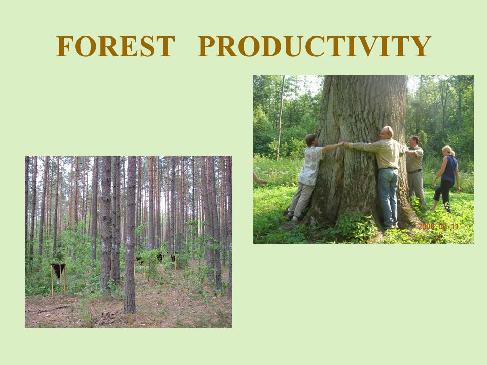 FOREST PRODUCTIVITY