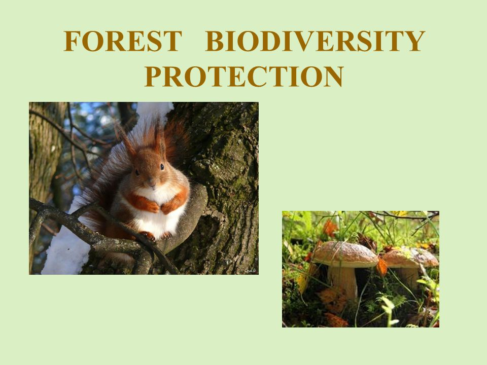 FOREST BIODIVERSITY PROTECTION