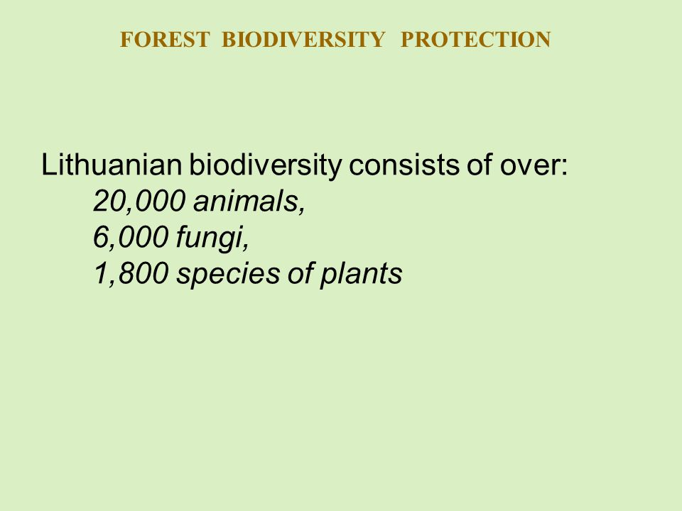 Lithuanian biodiversity consists of over: 20,000 animals, 6,000 fungi, 1,800 species of plants FOREST BIODIVERSITY PROTECTION