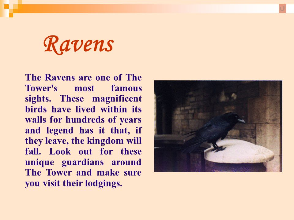 Ravens The Ravens are one of The Tower's most famous sights. These magnificent birds have lived within its walls for hundreds of years and legend has