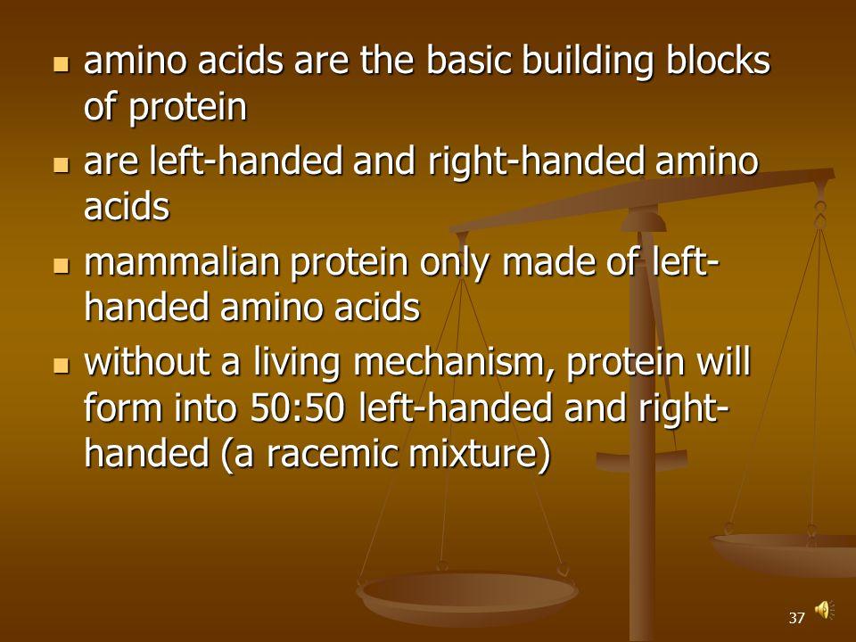 36 amino acids are the basic building blocks of protein amino acids are the basic building blocks of protein are left-handed and right-handed amino acids are left-handed and right-handed amino acids mammalian protein only made of left- handed amino acids mammalian protein only made of left- handed amino acids