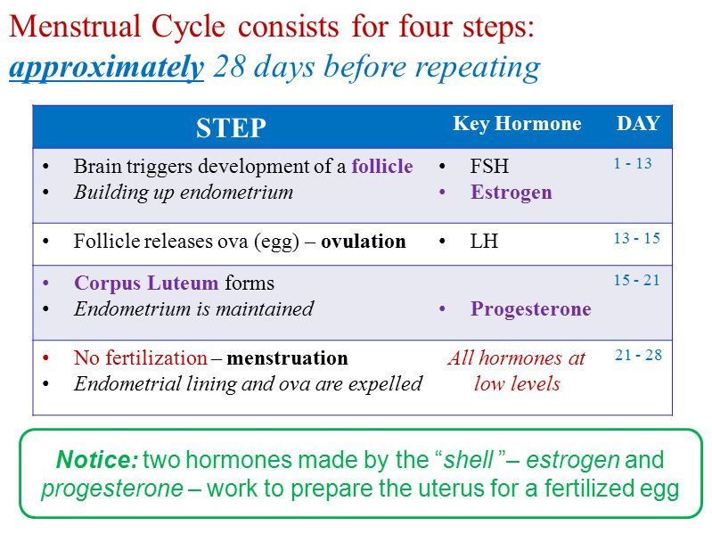 1421 142128 days 071421 Regression Pituitary gland Progesterone Estrogen 28 days FSH LH 07 07 Female Menstrual Cycle Brain Hormone Levels Ovarian Cycle Sex Hormone Levels Endometrial changes Notice: the shedding of the endometrium ends and begins the diagram - it's a continuous CYCLE