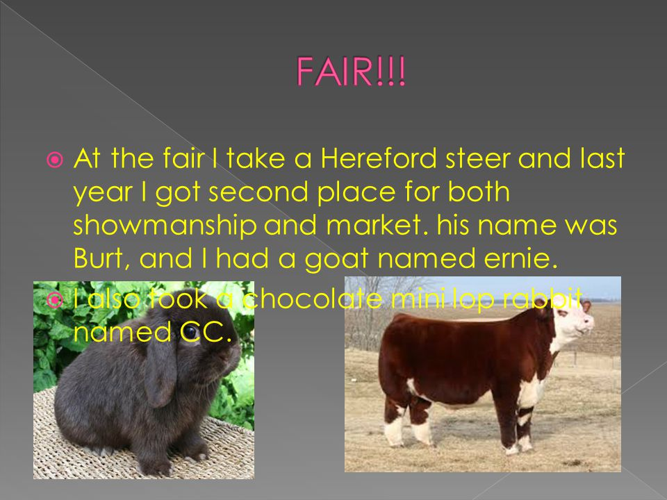  At the fair I take a Hereford steer and last year I got second place for both showmanship and market.