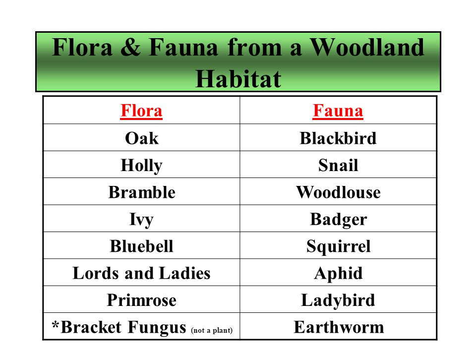 Fauna of the Woodland (Woodlice) Role in energy flow: Decomposer.