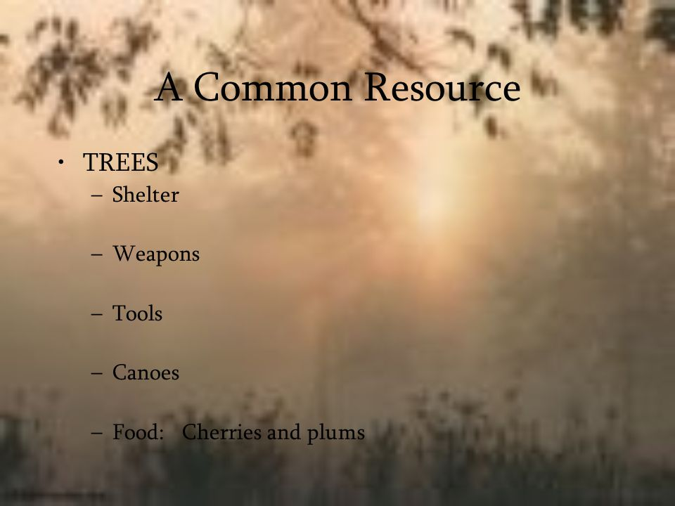 A Common Resource TREES –Shelter –Weapons –Tools –Canoes –Food: Cherries and plums