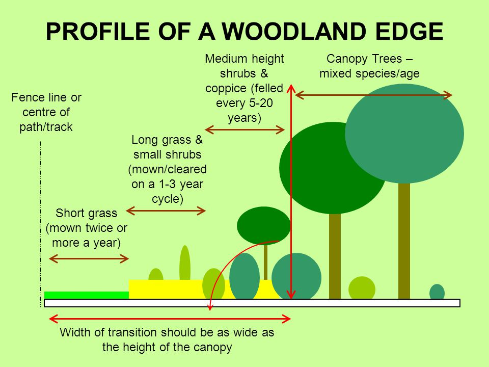 Short grass (mown twice or more a year) Long grass & small shrubs (mown/cleared on a 1-3 year cycle) Medium height shrubs & coppice (felled every 5-20