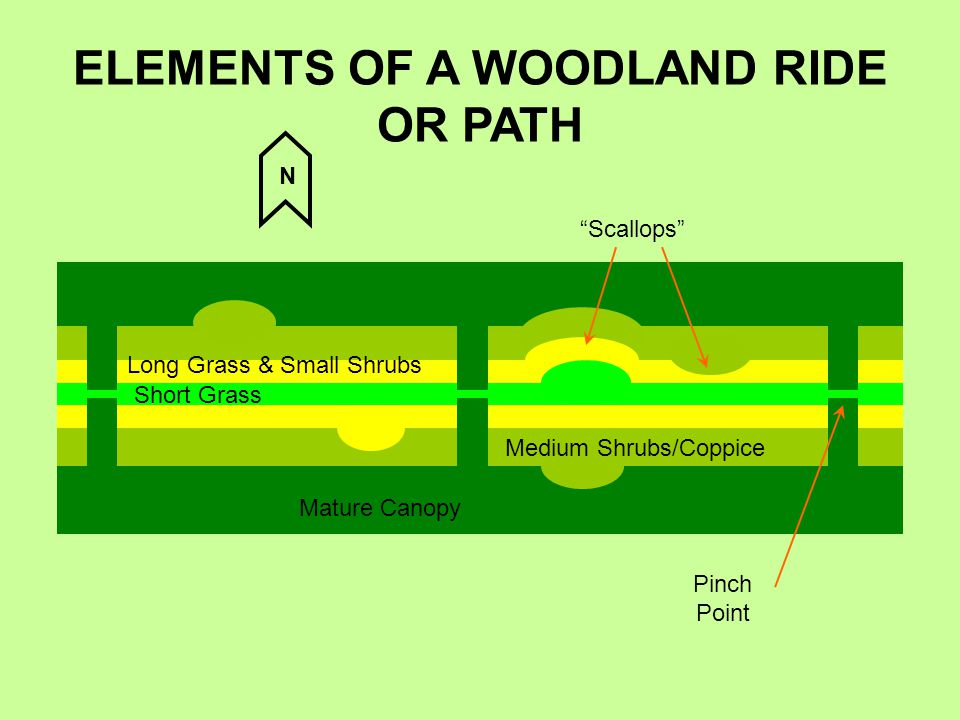 "ELEMENTS OF A WOODLAND RIDE OR PATH Mature Canopy Medium Shrubs/Coppice Long Grass & Small Shrubs Short Grass ""Scallops"" Pinch Point N"