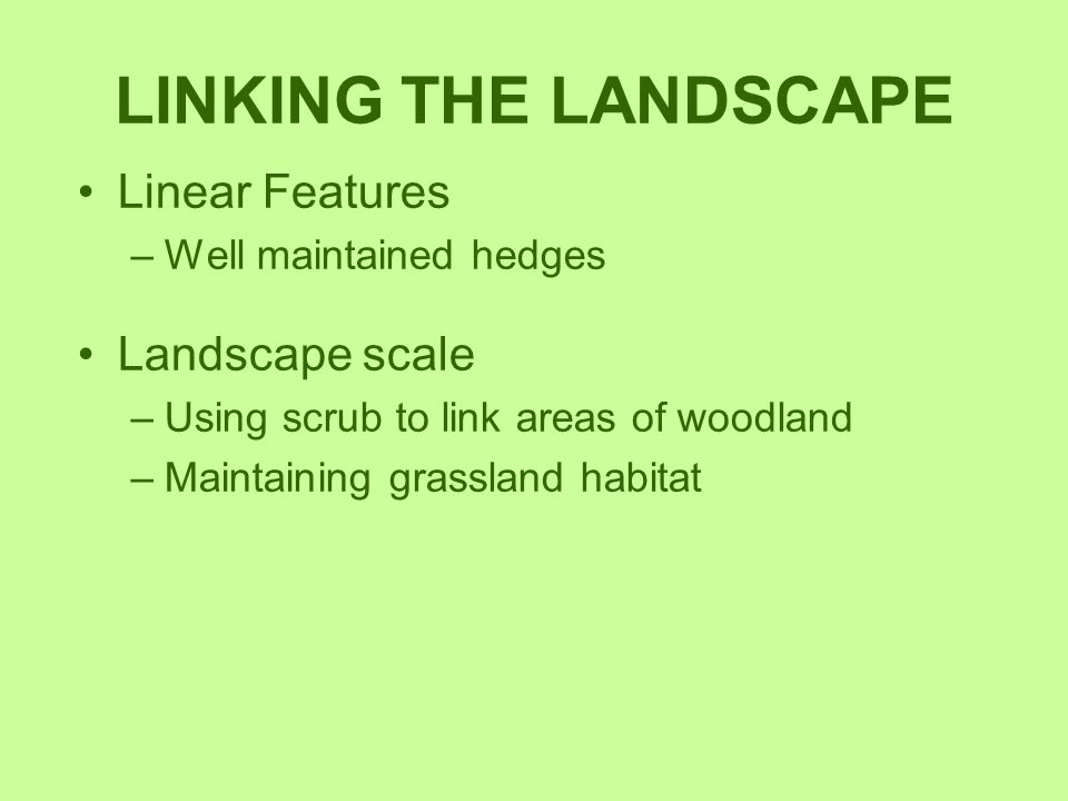 LINKING THE LANDSCAPE Linear Features –Well maintained hedges Landscape scale –Using scrub to link areas of woodland –Maintaining grassland habitat