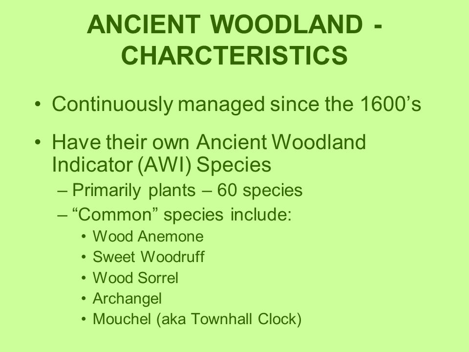 ANCIENT WOODLAND - CHARCTERISTICS Continuously managed since the 1600's Have their own Ancient Woodland Indicator (AWI) Species –Primarily plants – 60
