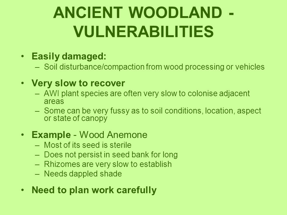 ANCIENT WOODLAND - VULNERABILITIES Easily damaged: –Soil disturbance/compaction from wood processing or vehicles Very slow to recover –AWI plant speci