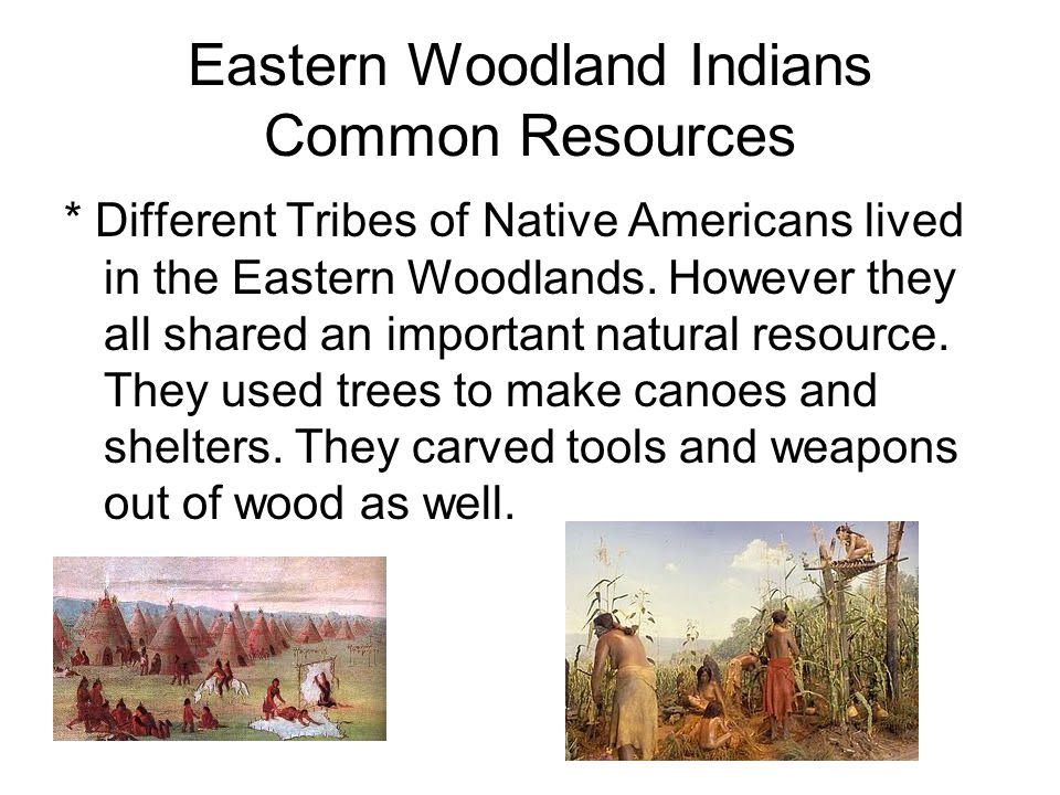 Eastern Woodland Indians Common Resources * Different Tribes of Native Americans lived in the Eastern Woodlands. However they all shared an important