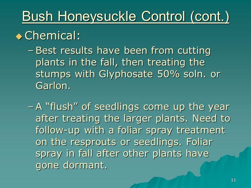 11 Bush Honeysuckle Control (cont.)  Chemical: –Best results have been from cutting plants in the fall, then treating the stumps with Glyphosate 50% soln.