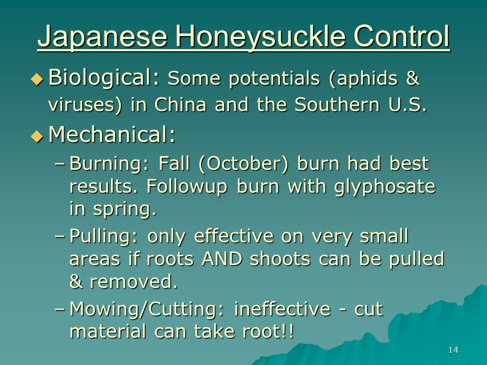 14 Japanese Honeysuckle Control  Biological: Some potentials (aphids & viruses) in China and the Southern U.S.