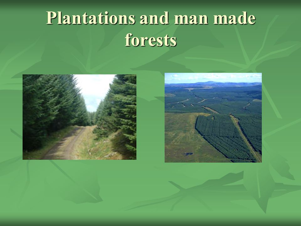 Plantations and man made forests