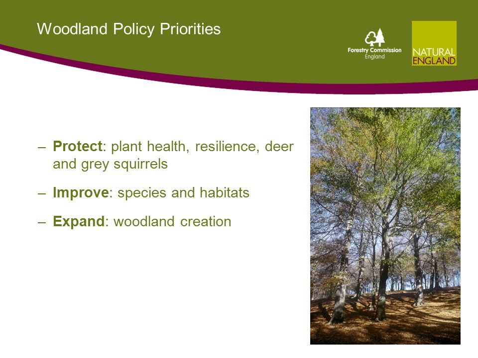 Woodland Policy Priorities –Protect: plant health, resilience, deer and grey squirrels –Improve: species and habitats –Expand: woodland creation 18