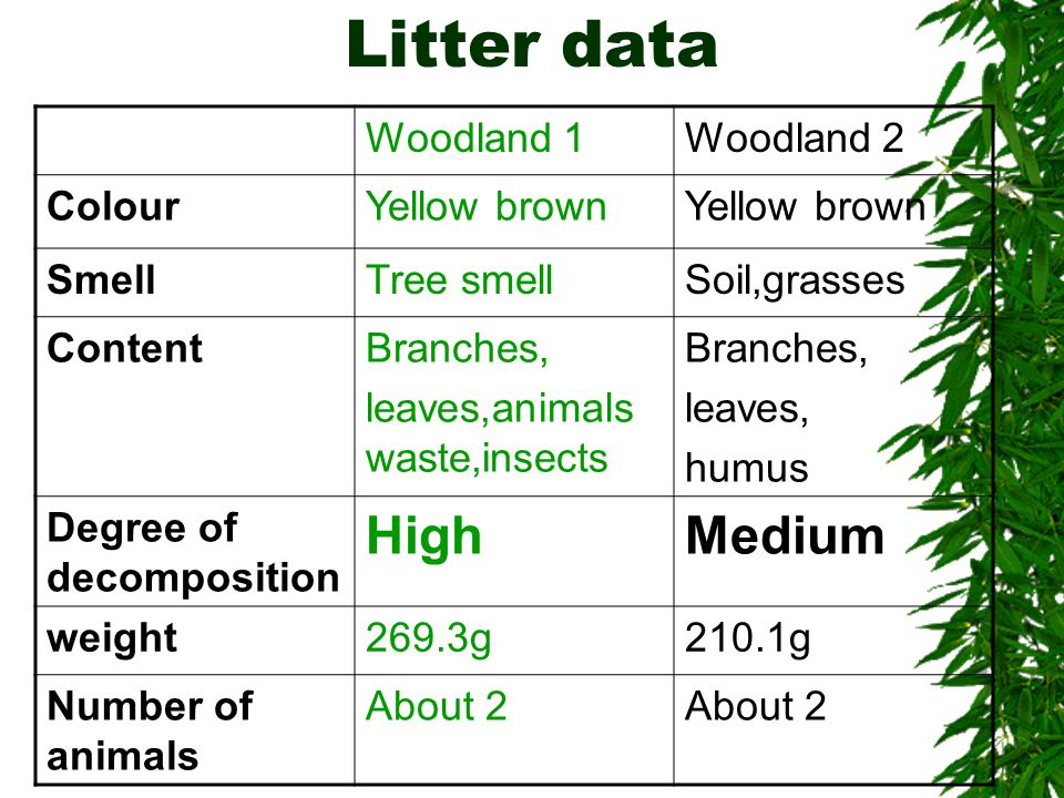 Litter data Woodland 1Woodland 2 ColourYellow brown SmellTree smellSoil,grasses ContentBranches, leaves,animals waste,insects Branches, leaves, humus Degree of decomposition HighMedium weight269.3g210.1g Number of animals About 2