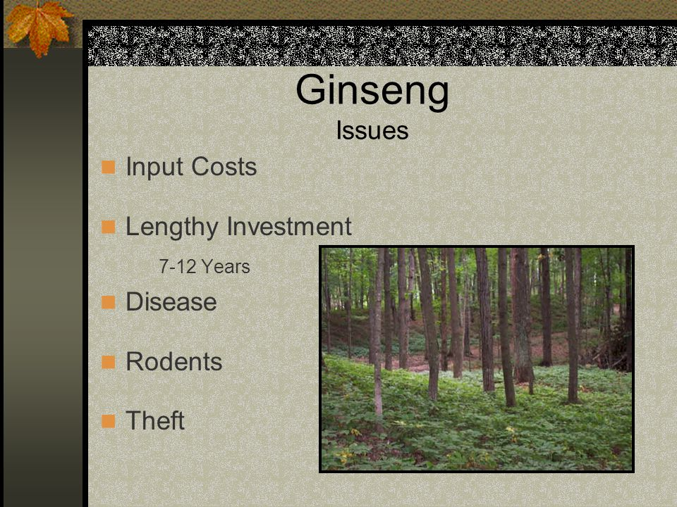 Ginseng (Wild – Simulated) Site North – Northeast Soil pH 4.5 – 6.5 Allowable Sunlight < 20% Initial Seed Establishment Stratified Seed