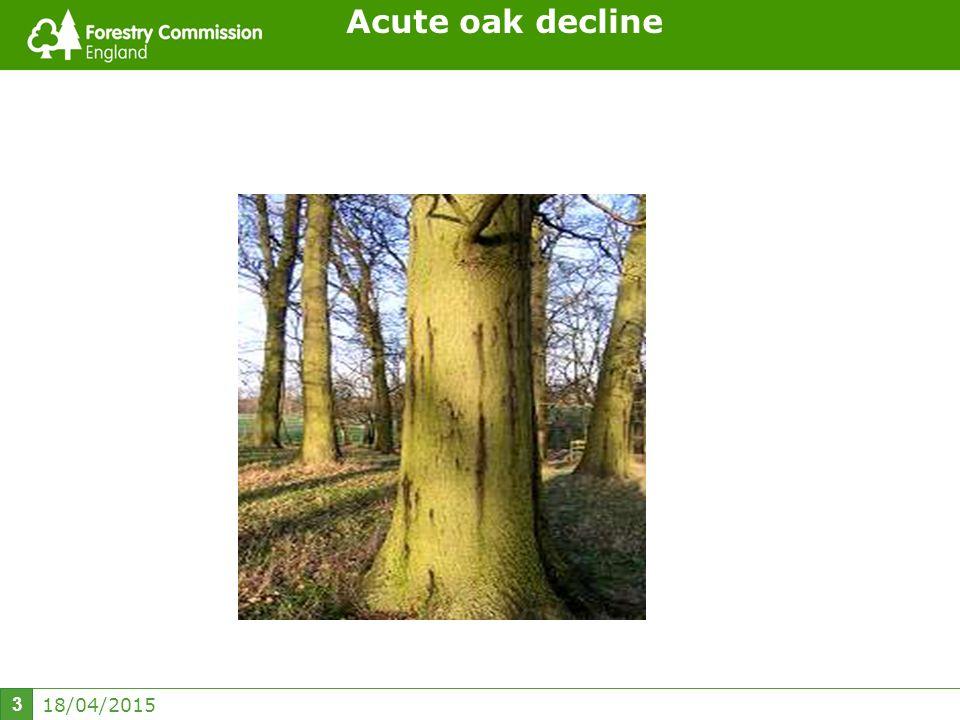 18/04/2015 3 Acute oak decline