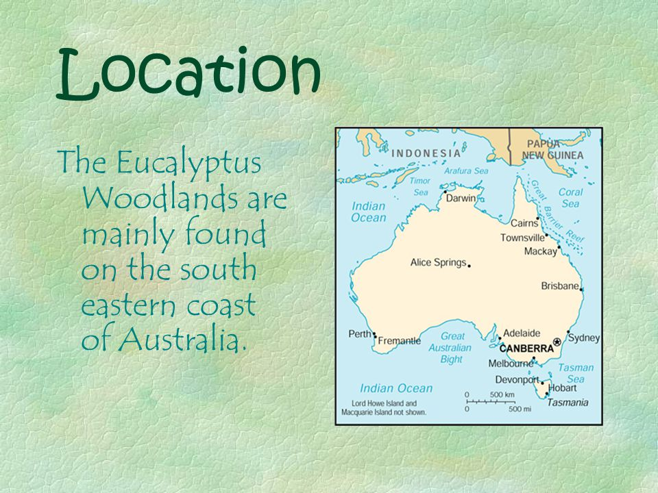 Location The Eucalyptus Woodlands are mainly found on the south eastern coast of Australia.