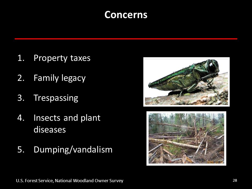 28 Concerns 1.Property taxes 2.Family legacy 3.Trespassing 4.Insects and plant diseases 5.Dumping/vandalism U.S.