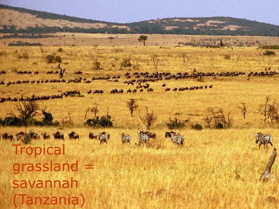 Tropical grassland (Bolivia)