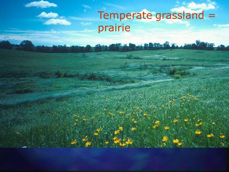 Tropical grassland = savannah (Tanzania)