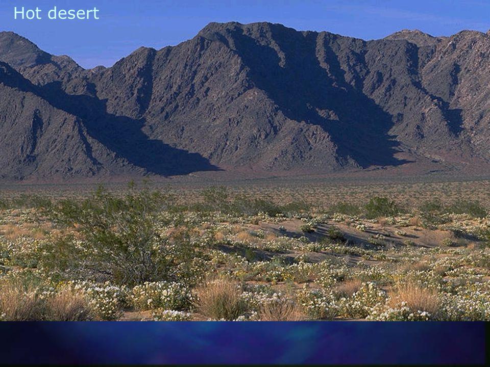 Cactus desert (Arizona)