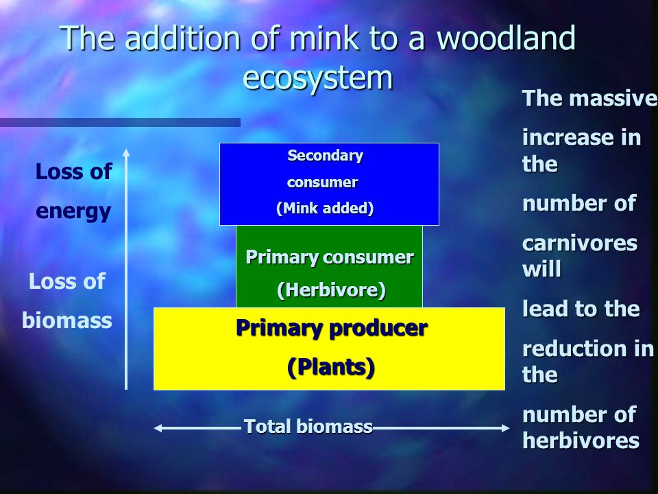 Q) If we assume our trophic pyramid is a UK woodland ecosystem (although whether there are any truly natural ones left is debatable). How would the in