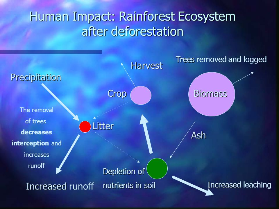 Once the vegetation is removed, nutrients are quickly removed from the system - creating infertile conditions - even deserts The nutrient cycle is easily disrupted here – it is a closed system Nutrient Cycle