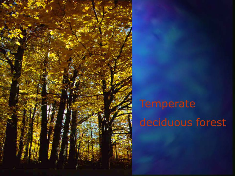 Tropical seasonal forest
