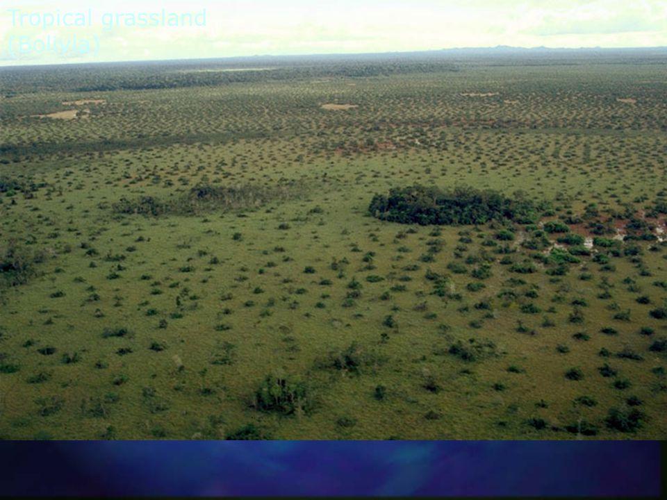 Tropical grassland / forest ecotone (Bolivia)
