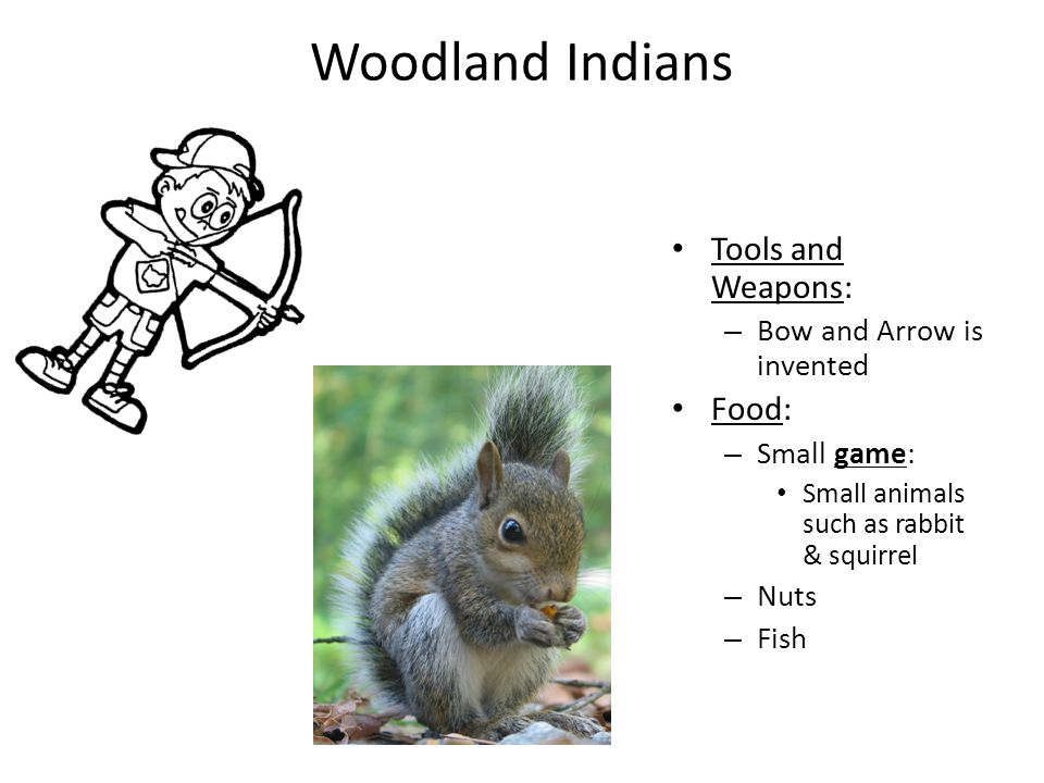 Woodland Indians Tools and Weapons: – Bow and Arrow is invented Food: – Small game: Small animals such as rabbit & squirrel – Nuts – Fish