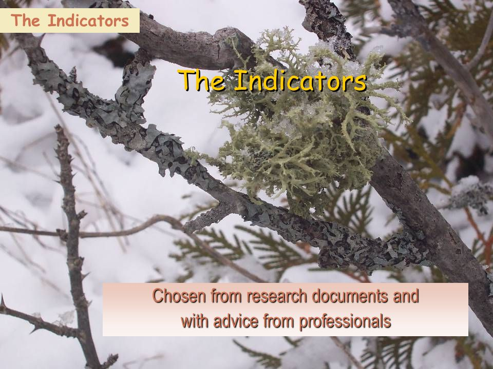 18 The Indicators Chosen from research documents and with advice from professionals The Indicators