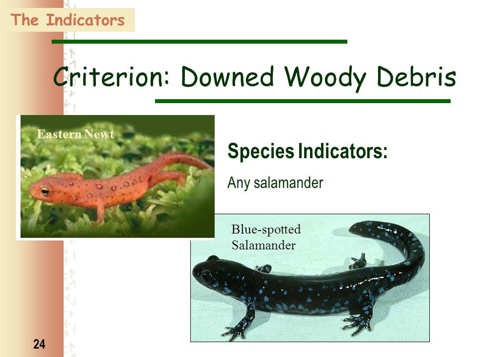 24 Eastern Newt Blue-spotted Salamander Criterion: Downed Woody Debris Species Indicators: Any salamander The Indicators